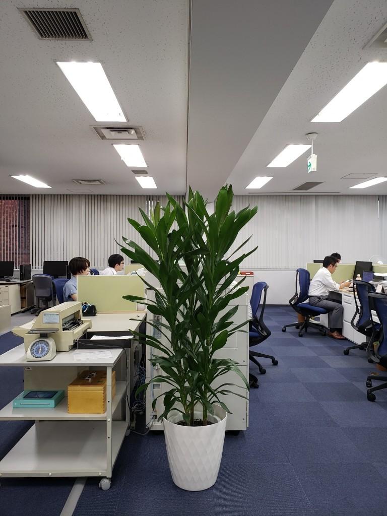 東京支店観葉植物コピー機前1909